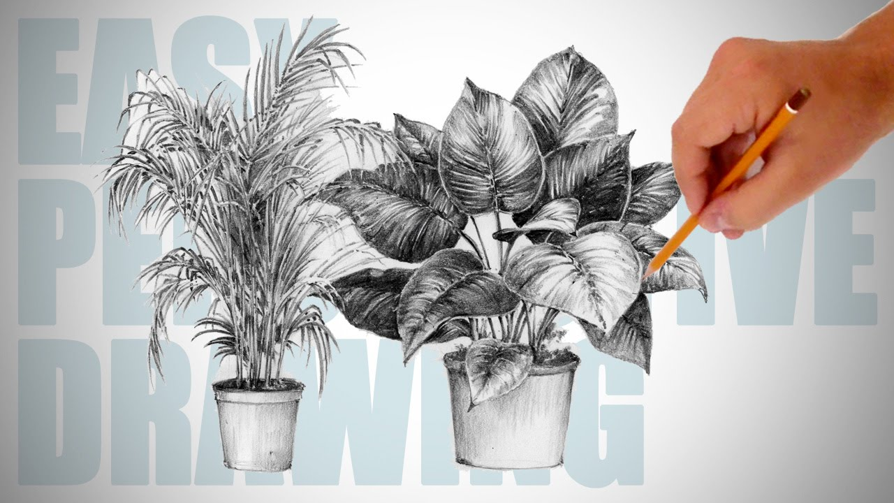 How to draw plants easy perspective drawing 19