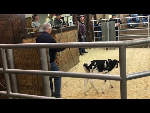 Livestock Auction - Covid19 Bringing Out New Buyers and I Buy 8 Calves!