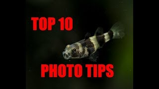 Top 10 Aquatic Photography Tips for ANY level