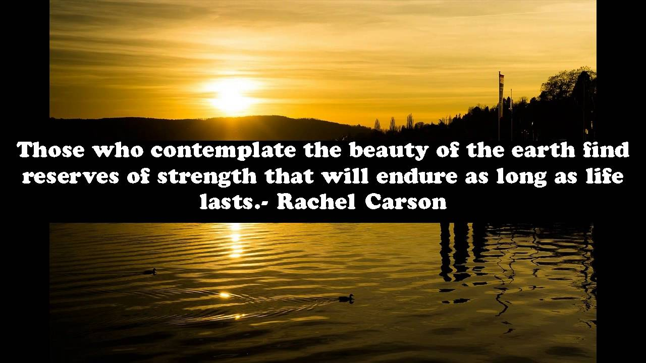Quotes About Strength Quotes About Strength And Beauty Mesmerizing Best 25 Women