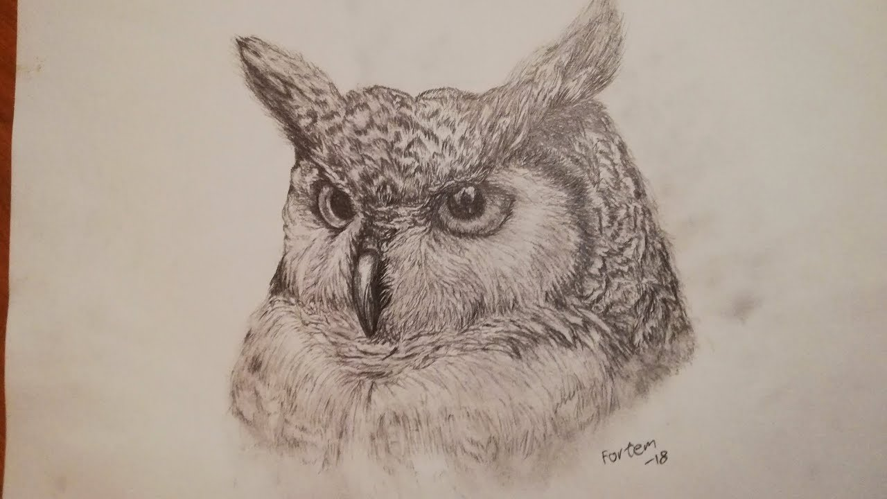 How to draw realistic owl pencil drawing