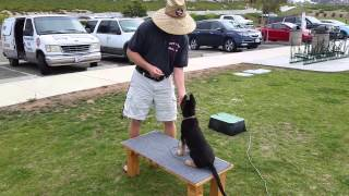 German Shepherd Puppy | Canine Tutors 408-455-1503