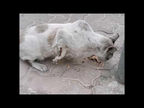Dubai Animal Awarenes Video 2016 Article by Terena Armstrong