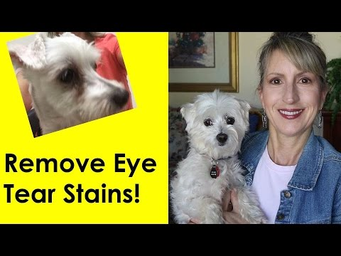 HOW TO REMOVE DOG'S TEAR STAINS!
