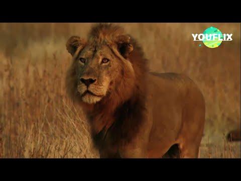La Loi Du Lion 2