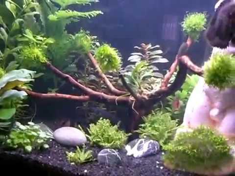 Allestimento acquario acqua dolce youtube for Arredo acquario acqua dolce