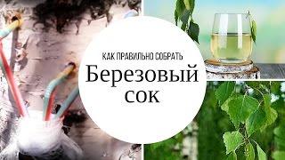 видео Калорийность Березовый сок
