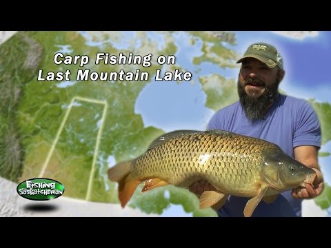 Last Mountain Carp