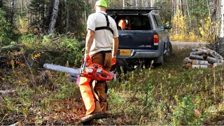Clearing a Driveway on Raw Land | Felling trees with a Chainsaw