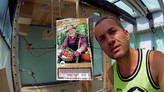 ❓Odc.478-Czy w bananach ze sklepu są nasiona,jaka ziemia,jaki nawóz, podlewanie roślin egzotycznych.