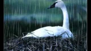 Prljavo Kazaliste-Moj Bijeli Labude