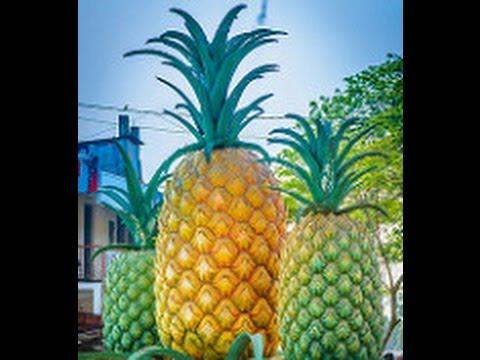 Pineapple statue at Madhupur Bus Stand, Madhupur, Tangail, Bangladesh