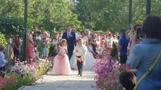 Розовая свадьба на Фестивале роз в Аткарске. 4 августа  2018 г.