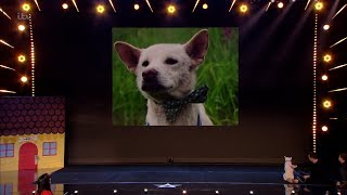 Britain's Got Talent 2020 Amanda & Her Magical Pooch Miracle Full Audition S14E05