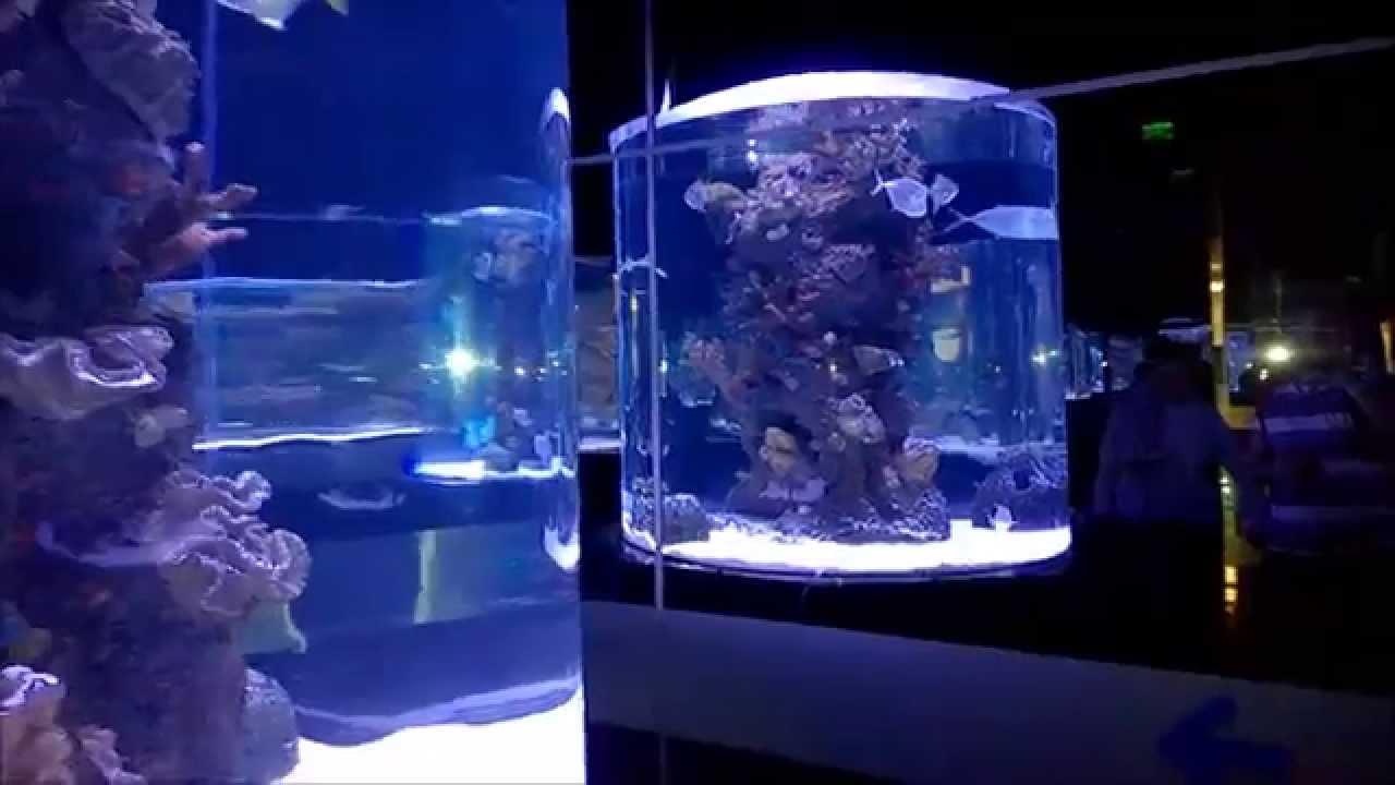 Круглый аквариум, рыбы, скат, акула, подводная лодка