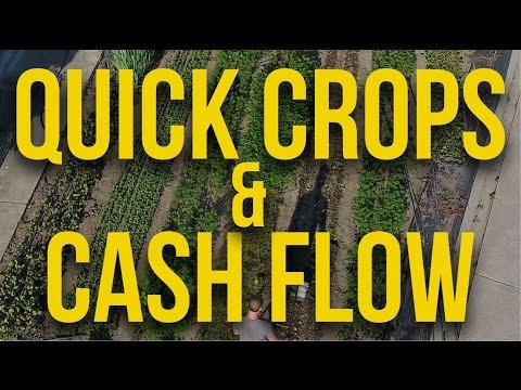 Quick Crops & Cash Flow