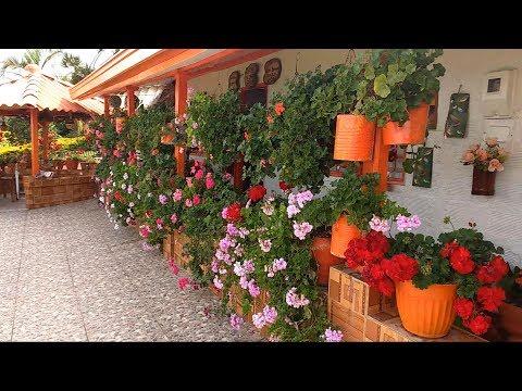 Tour por el jardín de mi vecina Magola | Candy Bu