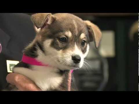 Welcome to the Pasadena Humane Society & SPCA