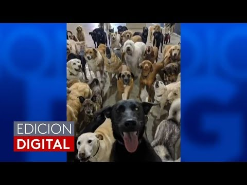Noticiero Univision #EdicionDigital 05/11/18