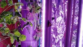 Бабочки зимой летят на аэропонную установку Аэро-Флора