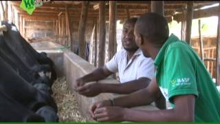 kenya farm report S02 E05 part 3