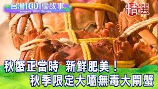 【台灣1001個故事 精選】秋蟹正當時 新鮮肥美! 秋季限定大嗑無毒大閘蟹
