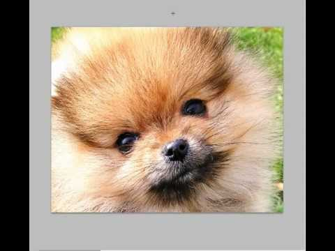 How to Take Really Good Pet Photos