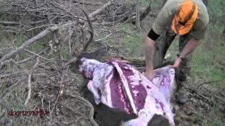 Sambar stag - caping & butchering