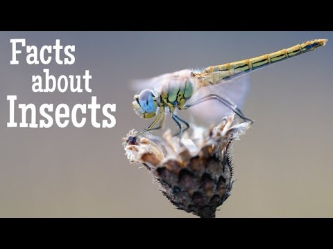 Facts about Insects for Kids   Classroom Learning Video