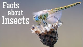 Facts about Insects for Kids | Classroom Learning Video