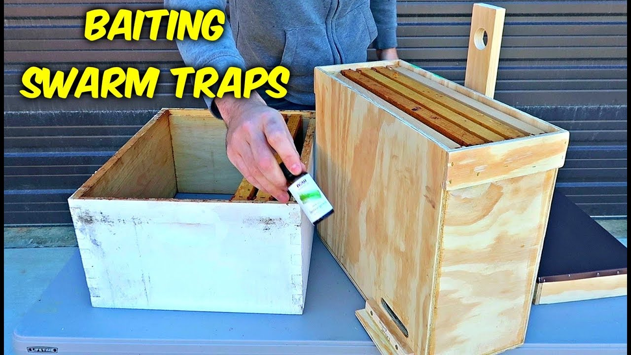 how-to-bait-a-swarm-trap-to-catch-free-bees
