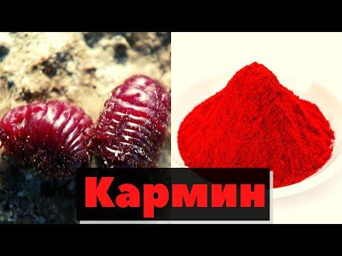 видео: Как производят кармин в Мексике | How is making carmin in Mexico