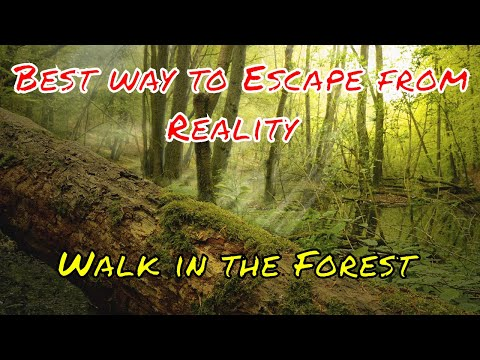 Walk in the Forest - Best way to Escape from Reality