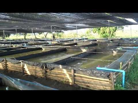 การเลี้ยงปลาดุกในบ่อพลาสติก เลี้ยงง่าย ดูแลง่าย และประหยัด