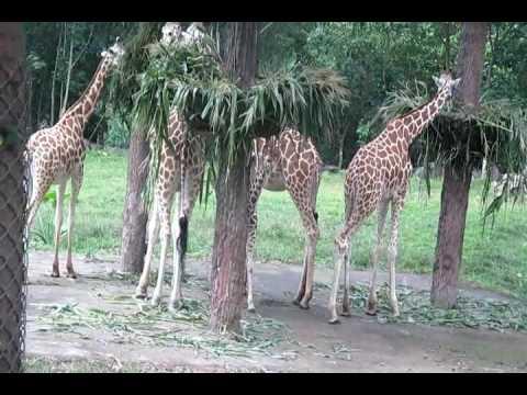 BP 4 - Taman Safari Indonesia II, Prigen Pasuruan