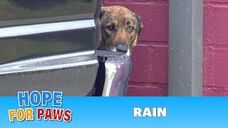 Homeless German Shepherd cries like a human!  I have never heard anything like this!!! thumbnail