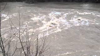 Abermule River 28.01.2014