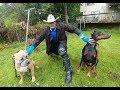 KING DOBERMAN MEETS BOSS PIT BULL SafeCalm Dog Whisperer BIG CHUCK MCBRIDE
