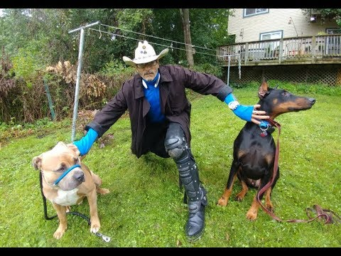 KING DOBERMAN MEETS BOSS PIT BULL SafeCalm Dog Whisperer BIG CHUCK MCBRIDE