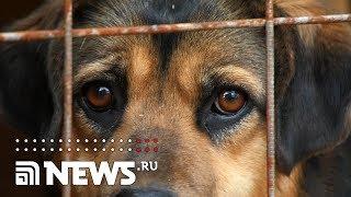 Собачья жизнь: как закон меняет судьбы животных