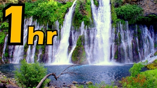 Relaxing Waterfall (with chirping tropical birds)