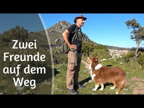 Adler & Geier in der Sierra Crestellina - Vogelbeobachtung in Casares