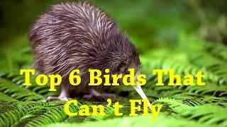 Top 6 Birds That Can t Fly List Of Flightless Birds