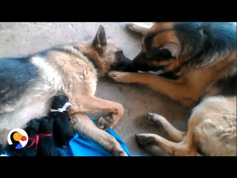 Dog Dad Comforts Wife After Giving Birth | The Dodo