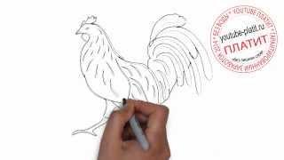 Как красиво нарисовать гоночного петуха(Как нарисовать картинку поэтапно простым карандашом за короткий промежуток времени. Видео рассказывает..., 2014-06-29T03:31:57.000Z)