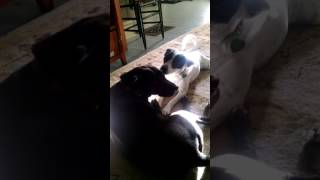 Dog loves kissing her dog friend.