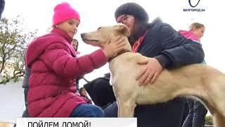 Акция «Пойдем домой» проходит в Белгороде