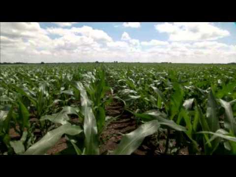 Quilt Xcel and Quadris Fungicides Improve Water Use Efficiency ... : quilt xcel fungicide - Adamdwight.com