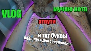 VLOG: мучаю кота + инсайд инфа на 6 месяцев