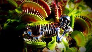 Touch Me - Venus flytrap / Touche moi / Berühre mich - Venusfliegenfalle